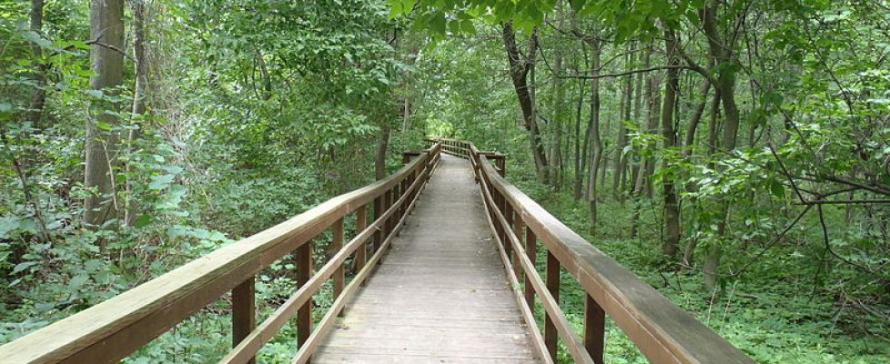 Burchfield_Nature_Center_path