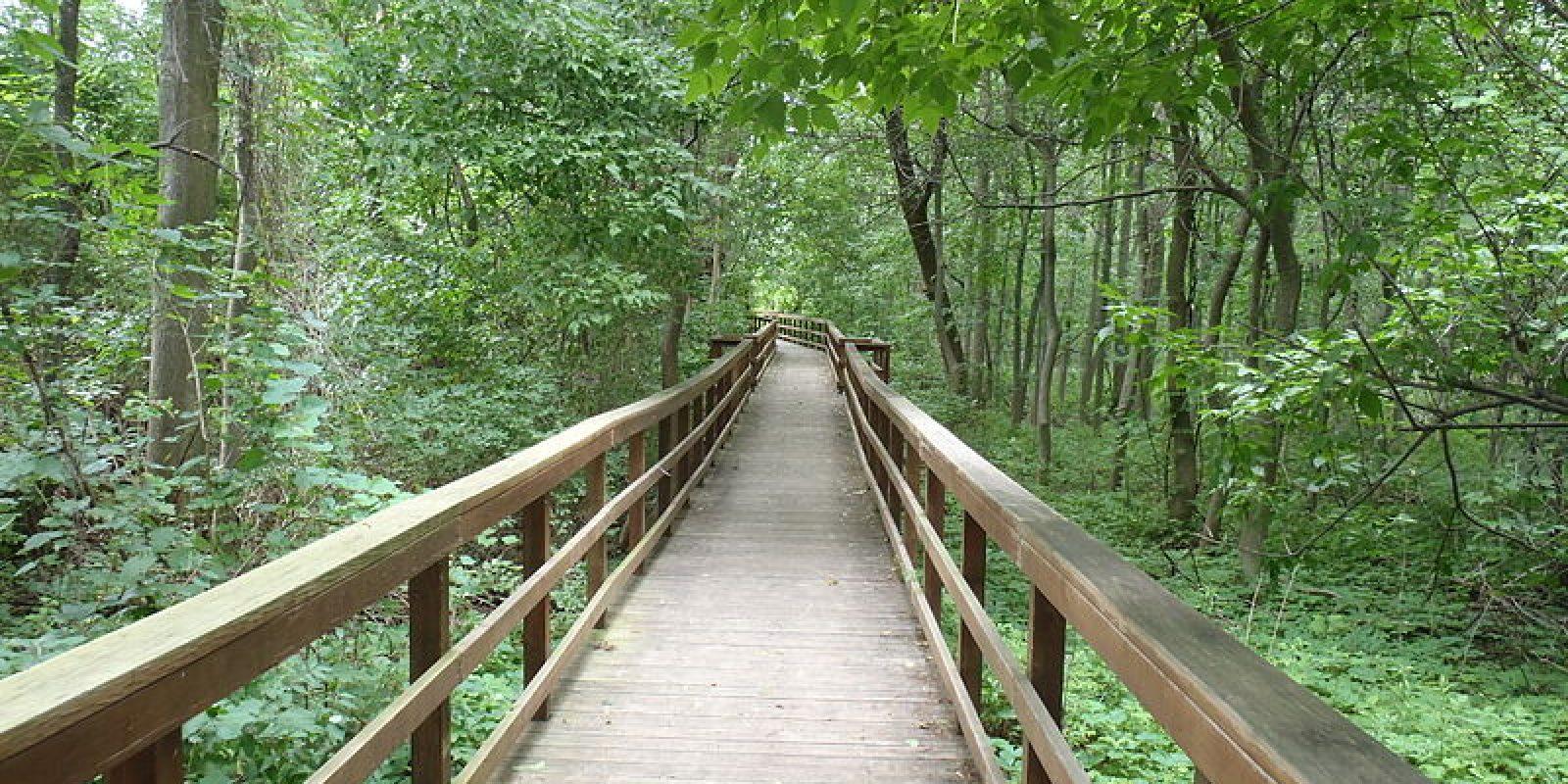 Burchfield_Nature_Center_path