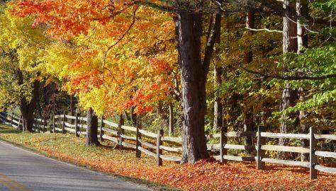 Ohio fall foliage