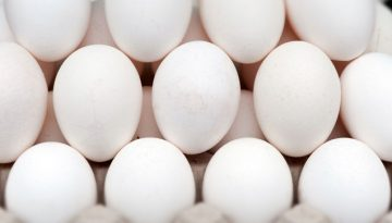 Egg Image for article